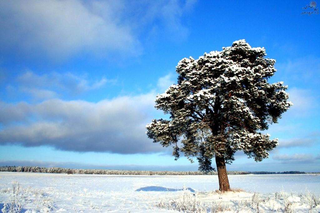 copaci_singuratici_iarna_12