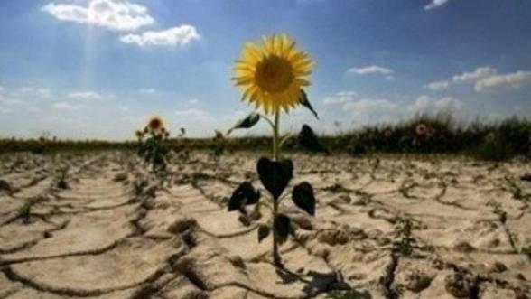 Seceta-din-Romania-Suntem-tara-cea-mai-afectata-din-Europa